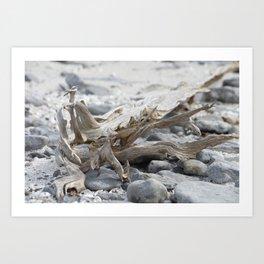 Driftwood and Beach Rocks Art Print