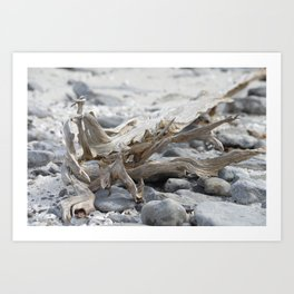 Driftwood and Beach Rocks Art Print