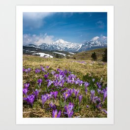 Mountains and crocus flowers on Velika Planina, Slovenia Art Print