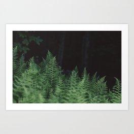 Wild Ferns Art Print