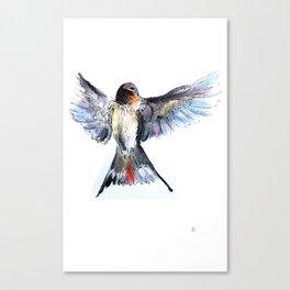 Chilean Swallow Canvas Print