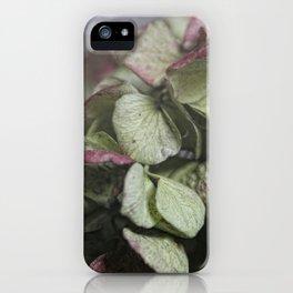 Hortensie iPhone Case