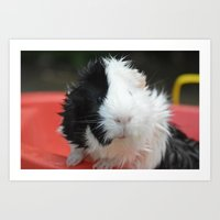 guinea pig Art Prints featuring Guinea Pig by MelissaLaDouxPhoto