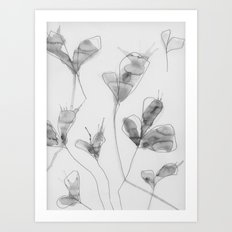 January flowers Art Print