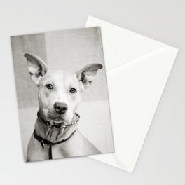 Shelter Dog Portrait Stationery Cards