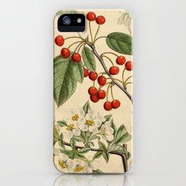 Malus sargentii, Rosaceae iPhone Case