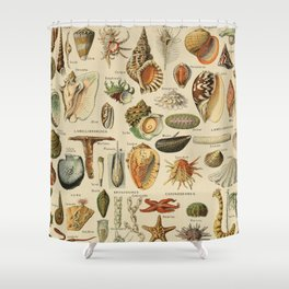 Vintage sealife and seashell illustration Shower Curtain