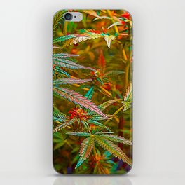 Bud Lace iPhone Skin