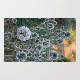 Seed Head Of Leek Flower Allium Sphaerocephalon  Rug