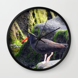 Black Oystercatcher Wall Clock