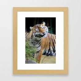 Sunita Framed Art Print