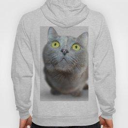 Funny Staring Cat Hoody