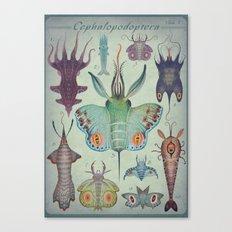 Cephalopodoptera Tab. I Canvas Print