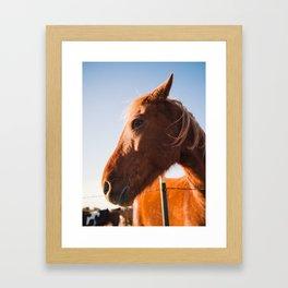 Horse. Palo Duro Canyon, Texas. Framed Art Print