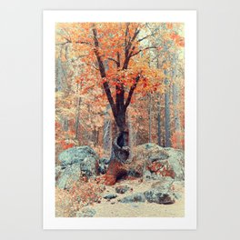 Old New Oak at Autumn Art Print
