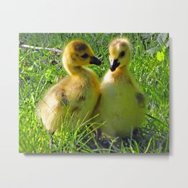 Cute Baby Canada Geese Stylized Photo Illustration Metal Print
