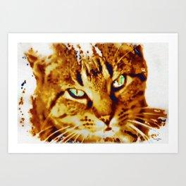 Strays need love too Art Print