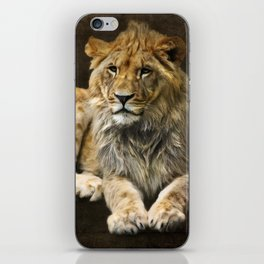 The young lion iPhone Skin