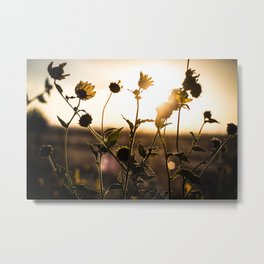 Summer Evening Metal Print