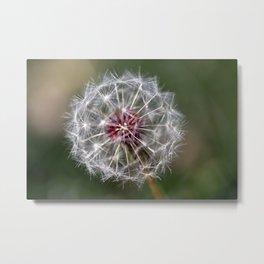 Dandelion Seed Head Metal Print