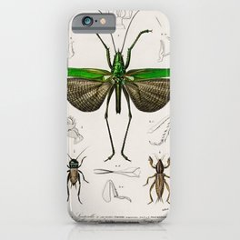 Vintage Print - Universal Dictionary of Natural History (1849) - Grasshoppers, Crickets iPhone Case
