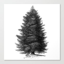 Blue spruce #society6 Canvas Print