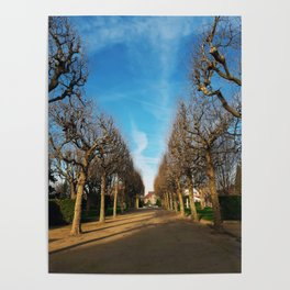 Bare trees alley Poster