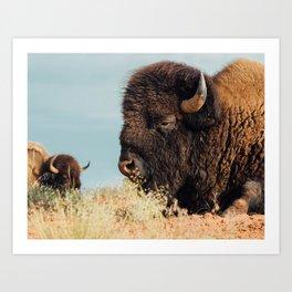 American Bison II Art Print