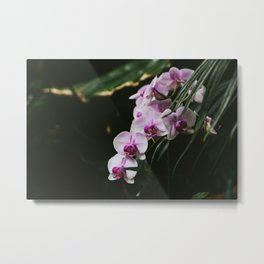 White & Purple Orchids Metal Print