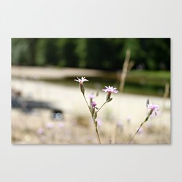 Yosemite Flower Canvas Print