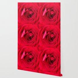 Red Rose Close-up #decor #society6 #buyart Wallpaper