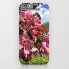 Crab Apple Blossoms iPhone 6s Slim Case