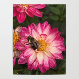 Bee Loved Dahlia Poster
