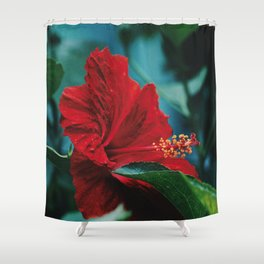 Flower Photography by Jessy Hoffmann Shower Curtain