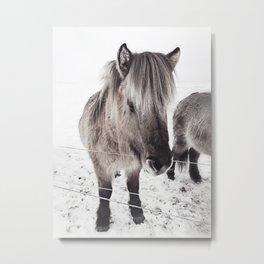 snowy Icelandic horse bw Metal Print