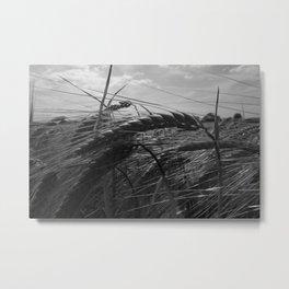 Summer Fields #1 Metal Print