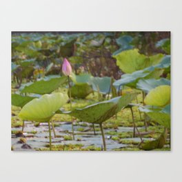 The Lilies of Vietnam Canvas Print