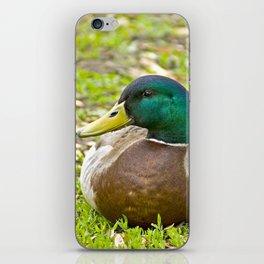 Mr. Mallard the Duck iPhone Skin