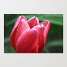 Tulip in red Canvas Print