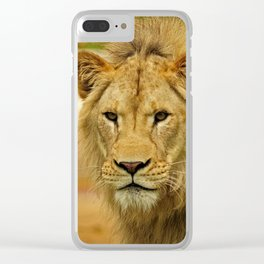 African Lion Clear iPhone Case