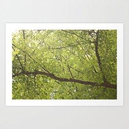 Alveoli or leaves? Art Print