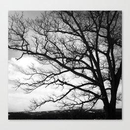 The Wishing Tree II Canvas Print