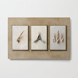 Wisteria Seed Pods Metal Print