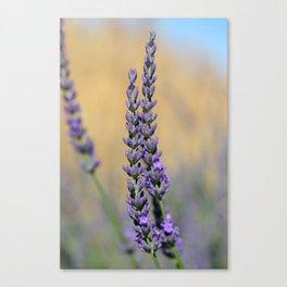 A sprig of Lavender Canvas Print