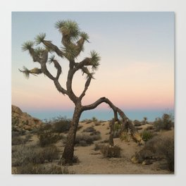 Desert Sunset Colors Canvas Print
