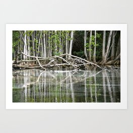 Water reflection Art Print