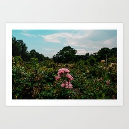 Peonies in the field Art Print