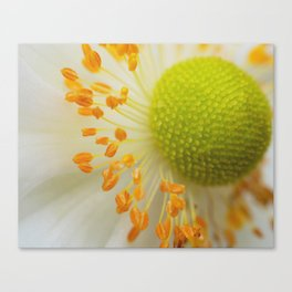 Green and Fluffy Canvas Print