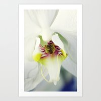 orchid Art Prints featuring Orchid by Falko Follert Art-FF77
