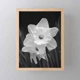 White Daffodil Framed Mini Art Print